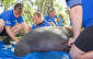 seaworld-orlando-returns-manatee-to-wild-1-031715